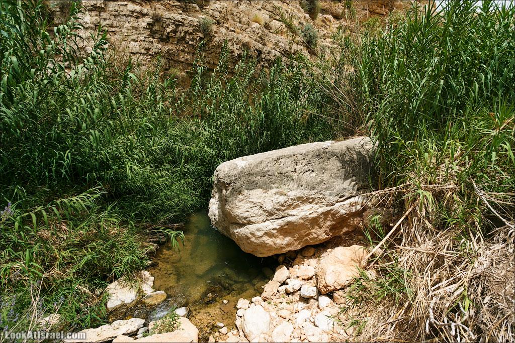 Фаранская лавра и верхний Вади Кельт | LookAtIsrael.com - Фотографии Израиля и не только...