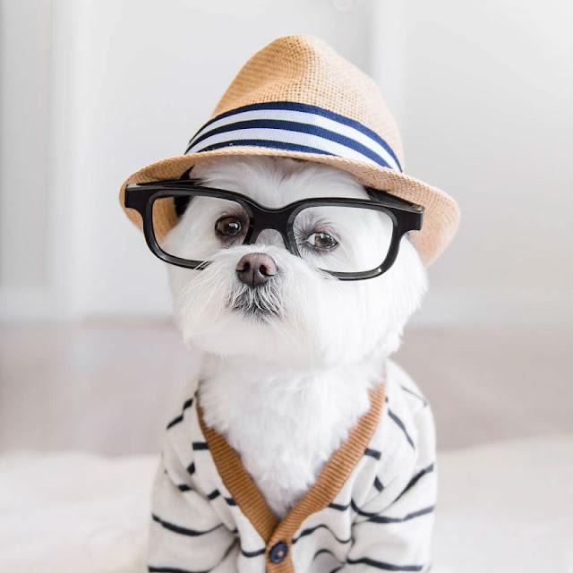 В какой Цветовой гамме видит собака