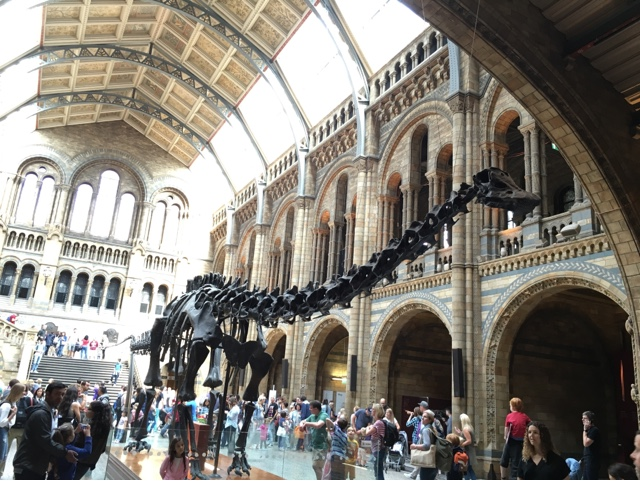 Dinosaur skeleton at the Natural History Museum, London