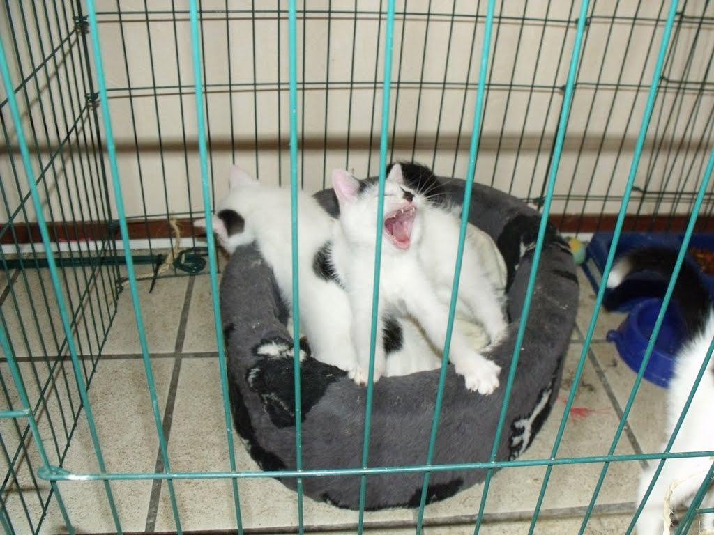 katten - 2010-07-03%2B16-18-02%2B-%2BDSCF1344.JPG