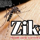 Zika: should you be worried about it ?