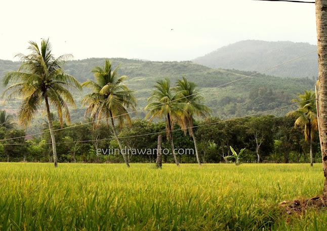 orang kampung lebih sehat karena dikelilingi alam yang hijau