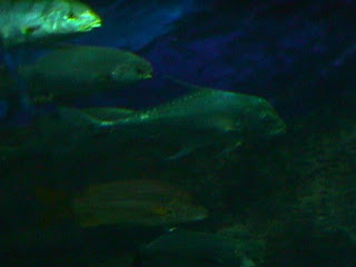 1060Aquarium Fish Schooling