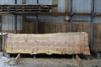 "560  Burly Maple -5 10/4 x  44"" x  36"" Wide x  12'  Long"