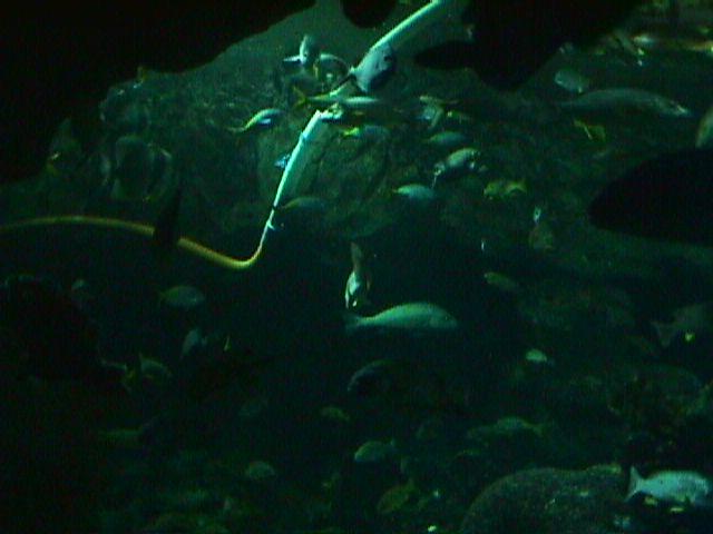 1050Aquarium Fish Schooling