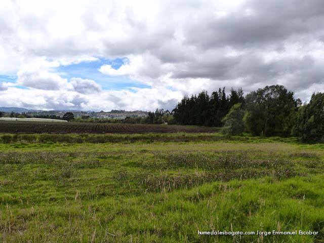 Reserva Thomas Van der Hammen
