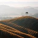 Murlo Tuscany_John Gray.jpg