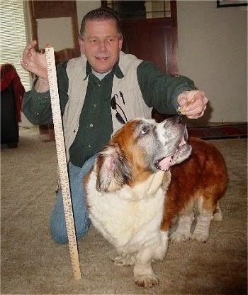 метисы собак