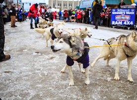 Iditarod2015_0136.JPG