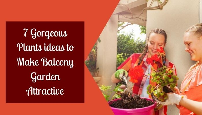 7 Gorgeous Plants ideas to Make Balcony Garden Attractive