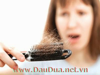 tinh dầu dừa sẽ là vị cứu tinh cho bạn trị rụng tóc