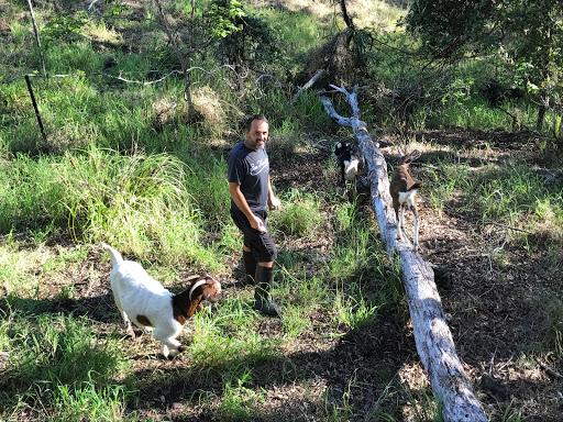 nick-goats-2017-04-16-13-27.JPG
