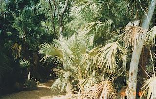 1330Mataranka Springs