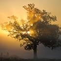 Bushy Park Sunrise_Martin Patten.jpg