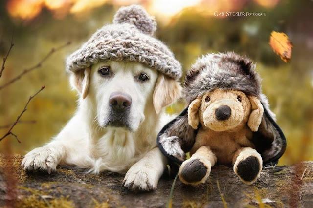 нос собаки