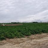 Westhoek aug 2013 - 15-8-2013%2B_%2B11_07_24%2BDSCF5116.JPG
