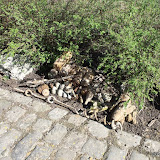 Westhoek Maart 2011 - 2011-03-19%2B11-49-46%2B-%2BDSCF1999.JPG