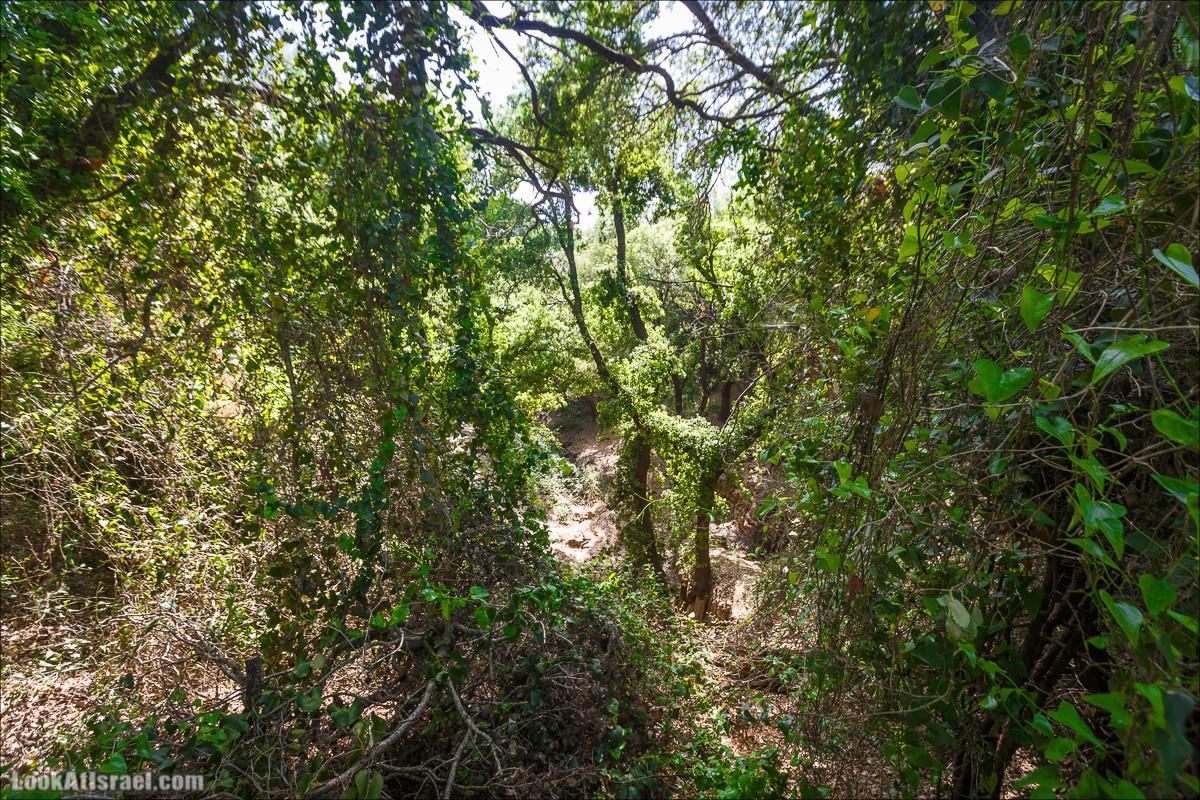 Пещера Пар   Paar Cave   מערת פער   LookAtIsrael.com - Фото путешествия по Израилю
