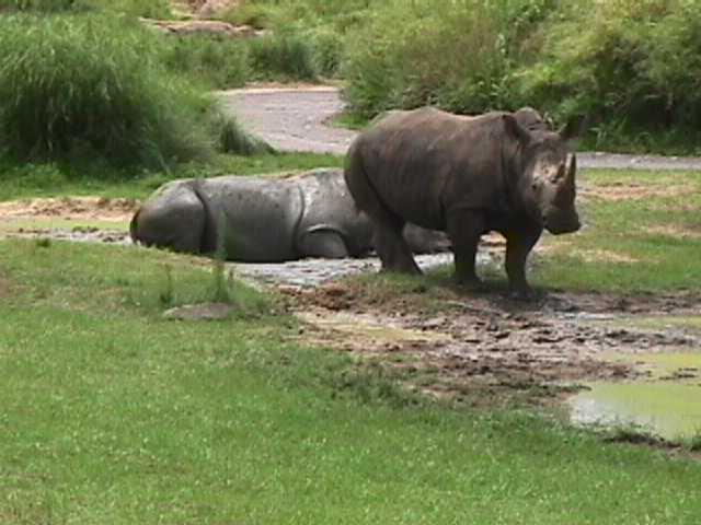 0410African Safari