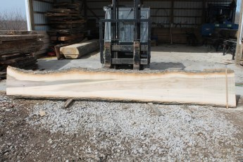 "Tulip Poplar 135-1  2"" x 24"" - 17"" Wide x 16' Long  Kiln dried"