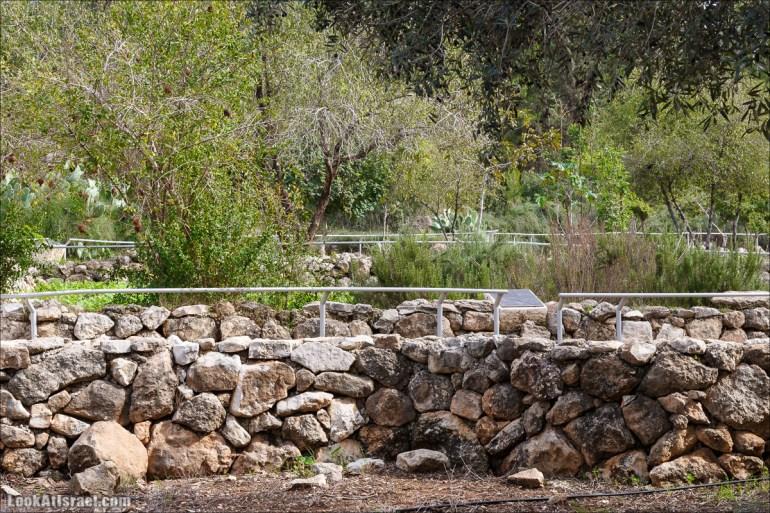 Лес Бен Шемен   Ben Shemen Forest   סודות של עיר בן שמן   LookAtIsrael.com - Фото путешествия по Израилю