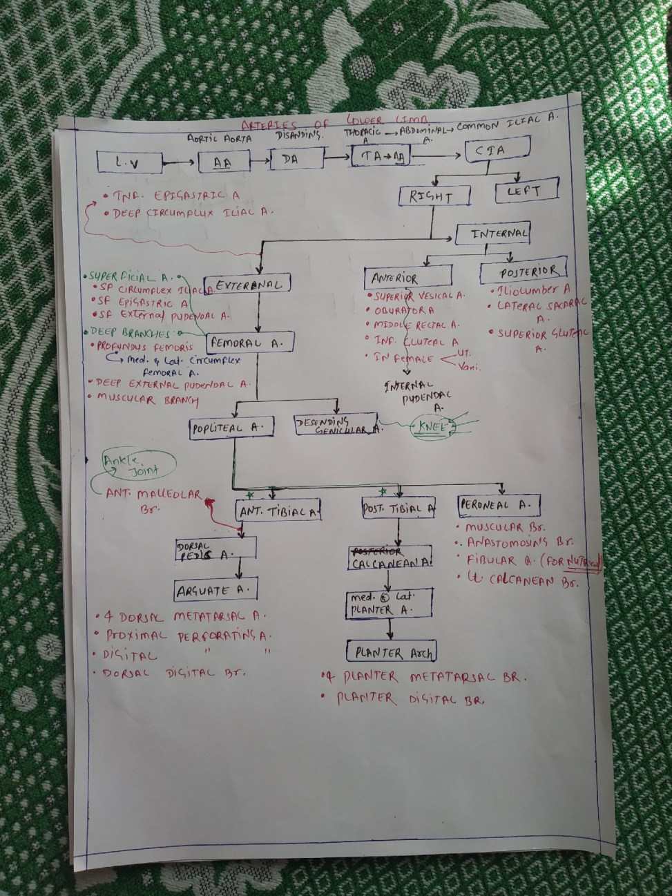 Artery of lower limb and blood supply flow chart    lower extremity arteries anatomy