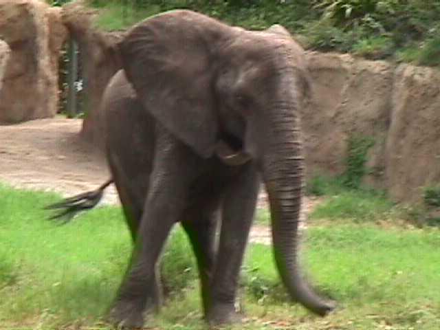 0330African Safari
