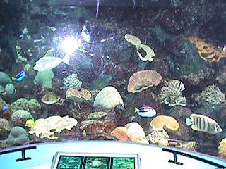 1110Aquarium Fish Schooling