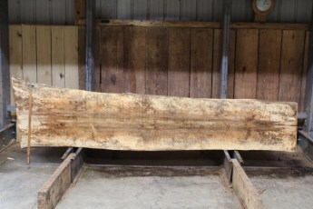 """612 Maple Spalted - 4 10/4x 27"""" x 22"""" Wide x  10'  Long"""