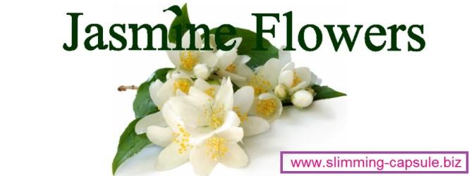 Khasiat Bunga Melati untuk Diet