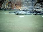 Endicot Arm - Dawes Glacier -  8-17-2009 5-13-49 PM.JPG