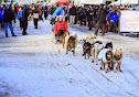 Iditarod2015_0225.JPG