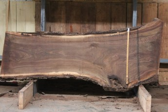 "582  Walnut -3 10/4 x 34"" x  25"" Wide x  8'  Long"