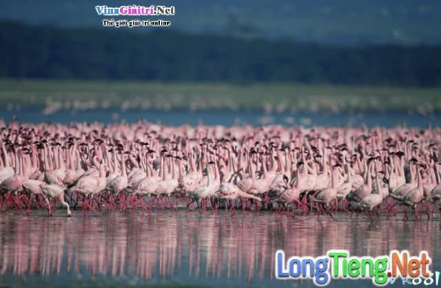 Xem Phim Bí Mật Của Chim Hồng Hạc - The Crimson Wing: Mystery Of The Flamingos - phimtm.com - Ảnh 1