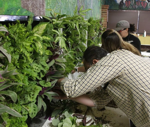 Curso de jardines verticales en México