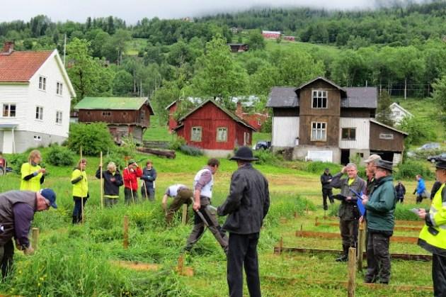 Kosidba u Norveskoj- Turisticka organizacija opštine Ljig208