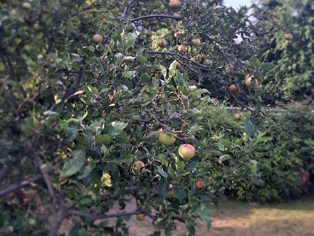 20150801_Orchard