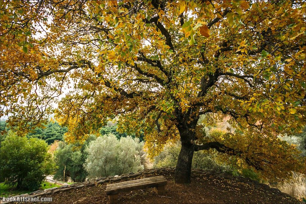 Израильской зимы очарование   LookAtIsrael.com - Фотографии Израиля и не только...