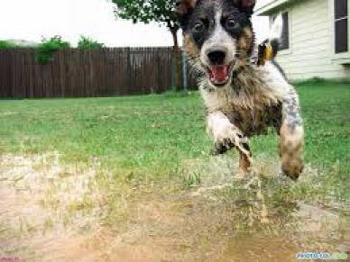 Чем мыть лапы собаке после прогулки