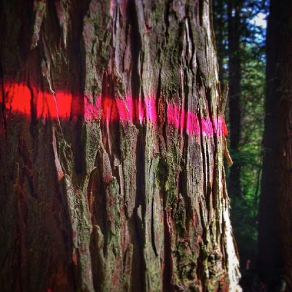 Tree marks