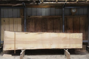 "602  Ambrosia Maple - 3 8/4x 31"" x 25"" Wide x  10'  Long"