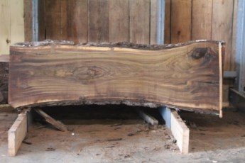 "579  Walnut -2 10/4 x 32"" x  24"" Wide x  8'  Long"