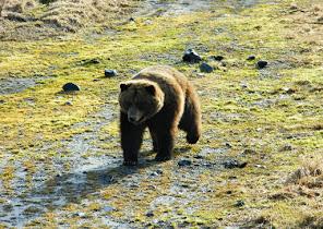 Bear Enclosure WCC - Patron 2.JPG