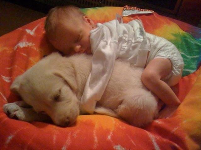 ребенок и собака в доме