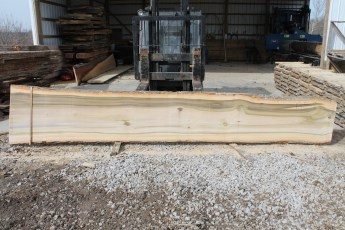 "Tulip Poplar 135-8  2 1/2"" x 32"" - 23"" Wide x 16' Long  Kiln dried"