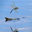 Third - Dragonfly_Bob Long.jpg