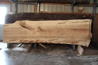 "575  Ambrosia Maple -5 12/4x 50"" x 33"" Wide x  12'  Long"