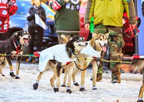 Iditarod2015_0376.JPG