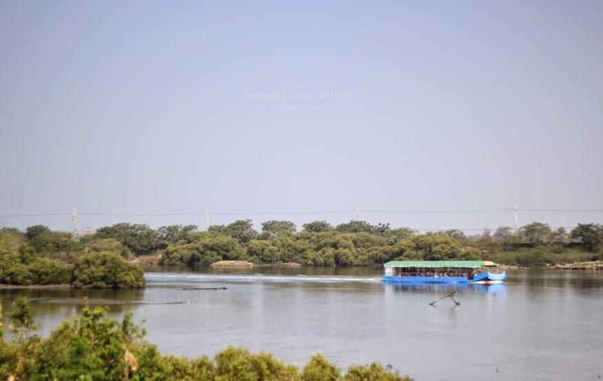 台南安平鹽水溪河口溼地-4