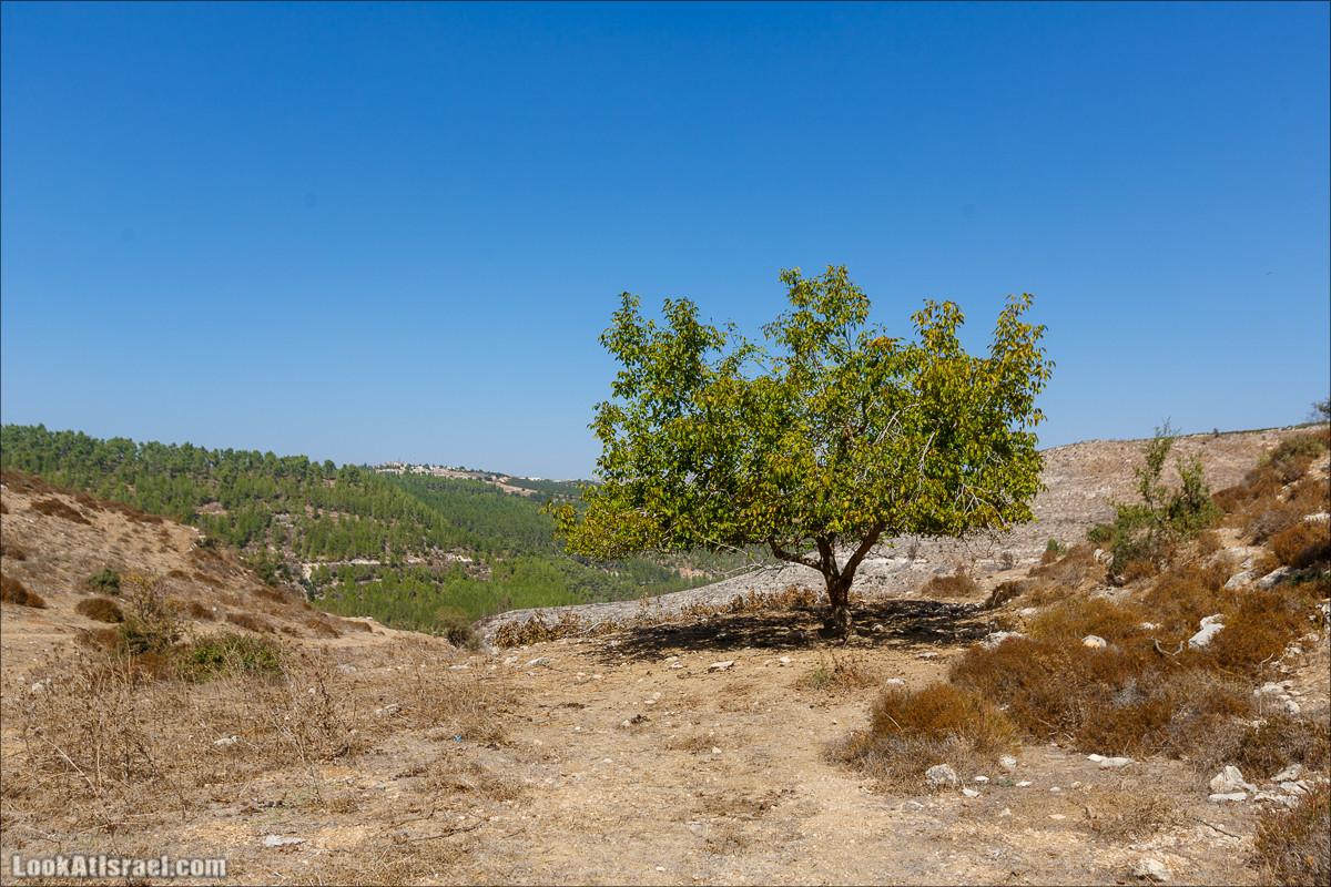 Ручей Гуш Халав | Nahal Gush Halav | נחל גוש חלב | LookAtIsrael.com - Фото путешествия по Израилю